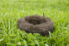 Pusty ptaka gniazdeczko na trawie Zdjęcia Royalty Free