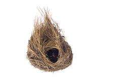Pusty ptaka gniazdeczko odizolowywający na białym tle obrazy stock