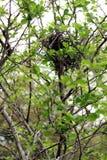 Pusty ptasi ` s gniazdeczko w drzewie Zdjęcia Royalty Free