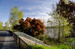 Pusty Sammamish jeziorny ślad Zdjęcie Royalty Free