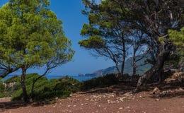 Pusty skalisty teren blisko iglastych drzew fotografia stock