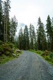 pusty sposób z lasowym i mgłowym zdjęcie royalty free