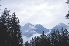 pusty sposób z lasowym i mgłowym obrazy royalty free