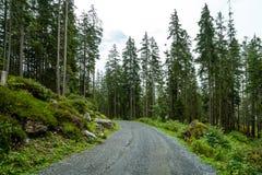 pusty sposób z lasowym i mgłowym obraz royalty free