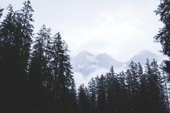 pusty sposób z lasowym i mgłowym zdjęcia stock