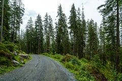 pusty sposób z lasowym i mgłowym obraz stock