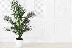 Pusty w lekkich brzmieniach izbowych z palmową rośliną zdjęcie royalty free