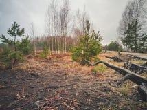 Pusty wieś krajobraz w bagnie z Few Loguje się przedpole zdjęcie royalty free