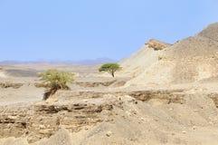 pustyni arabskiej widok zdjęcie stock