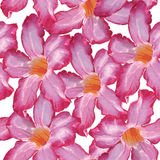 Pustyni róży menchii kwiat bezszwowy wzoru Nakreślenie na białym bac Zdjęcie Stock