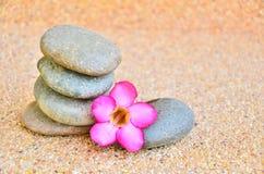 Pustyni róży kwiat zdjęcie royalty free