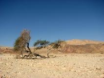 pustynia Zdjęcie Stock