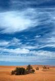 pustynia Fotografia Stock