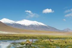 pustynia atacama chile zdjęcie royalty free