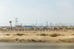 Pustynia beside główna droga z elektryczność poczta i sylwetka budynkami w tle przy Dubaj Zdjęcie Stock