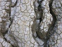 pustynia krzywej Obrazy Royalty Free