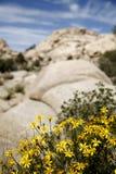 pustynia kwiaty zdjęcia stock