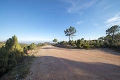 Pustynia palmy w Benicasim, Costa azahar obraz stock
