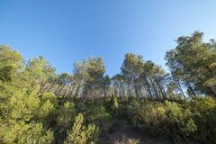 Pustynia palmy w Benicasim, Costa azahar zdjęcie royalty free