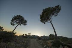 Pustynia palmy w Benicasim, Costa azahar zdjęcie stock