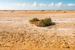 Pustynia w parku narodowym Rasa Mohammed Zdjęcie Stock