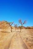 pustynna droga Zdjęcia Stock