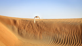 Pustynna Eagle sowa Zdjęcie Stock