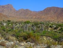 pustynna green zdjęcie stock