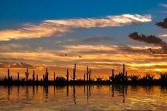 Pustynna oaza przy zmierzchem z chmurami i pomarańcze barwił niebo fotografia stock