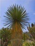 pustynna palma Obrazy Royalty Free