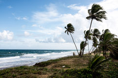 Pustynna plaża Zdjęcia Royalty Free