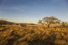 pustynna równina Zdjęcie Royalty Free