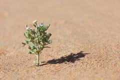 Pustynna roślina w piasku z malutkim żółtym kwiatem. obrazy stock