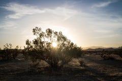 Pustynna roślina z światła słonecznego zerkaniem obrazy stock