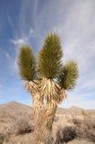 pustynna roślinność Obrazy Royalty Free