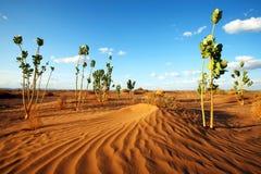 pustynna roślinność Obraz Stock