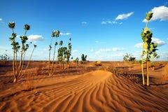 pustynna roślinność Zdjęcia Royalty Free