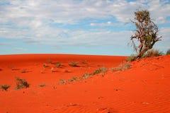 pustynna roślinności Obrazy Stock