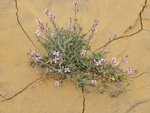 pustynna roślina zdjęcia stock