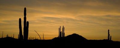 pustynna scena Zdjęcie Royalty Free