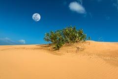 Pustynna scena z diuną, Bush i księżyc w pełni przy Dinh przylądkiem piaska, Ninh Thuan prowincja, Wietnam obraz royalty free