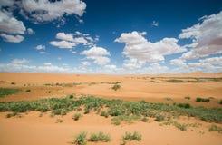 Pustynna sceneria zdjęcie royalty free