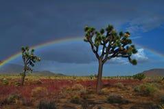 pustynna tęcza Zdjęcia Royalty Free