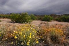 pustynna wiosna Obrazy Royalty Free