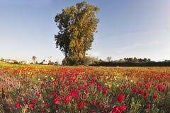pustynna wiosna Zdjęcie Stock