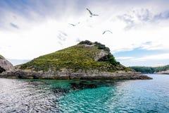 Pustynna wyspa nad którym latają frajery Obrazy Royalty Free