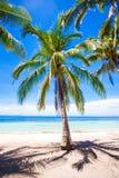 Pustynna wyspa z drzewkiem palmowym na plaży Fotografia Stock