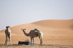 pustynne diuny Obrazy Royalty Free