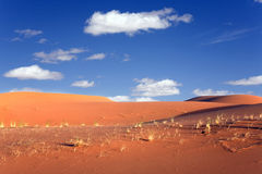 pustynne diuny Sahara Obrazy Royalty Free