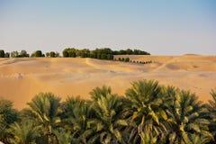 Pustynne diuny w Liwa oazie, Zjednoczone Emiraty Arabskie obraz royalty free